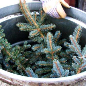 engelman-spruce-essential-oil