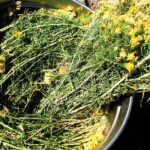 rabbit-brush-essential-oil