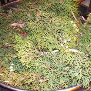 utah-juniper-essential-oil